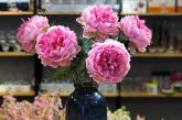 Câu chuyện của những đóa hoa Khloris