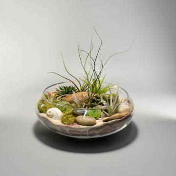Item 1780897 - Bình hoa thủy tinh Dish Garden ĐK 25.4cm